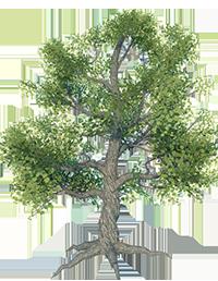 Larg_Tree_1