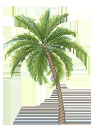 Palm_Tree_1