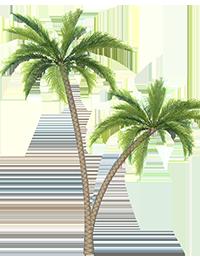 Palm_Tree_2